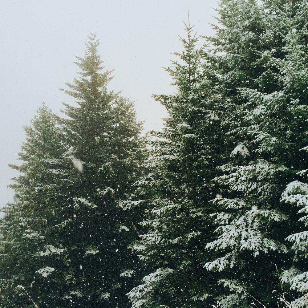 A Little Winter Holiday Break + A Reading List